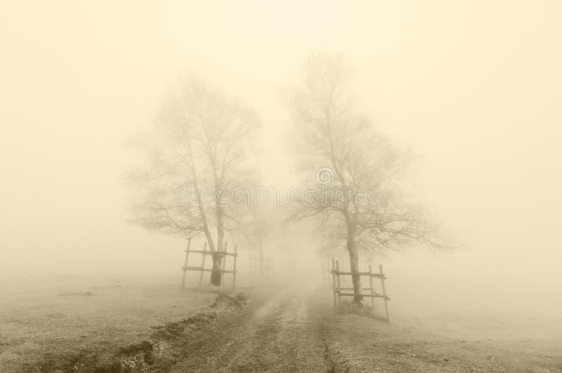Het geheimzinnige weg omringen door bomen met sepia kleur royalty-vrije stock fotografie