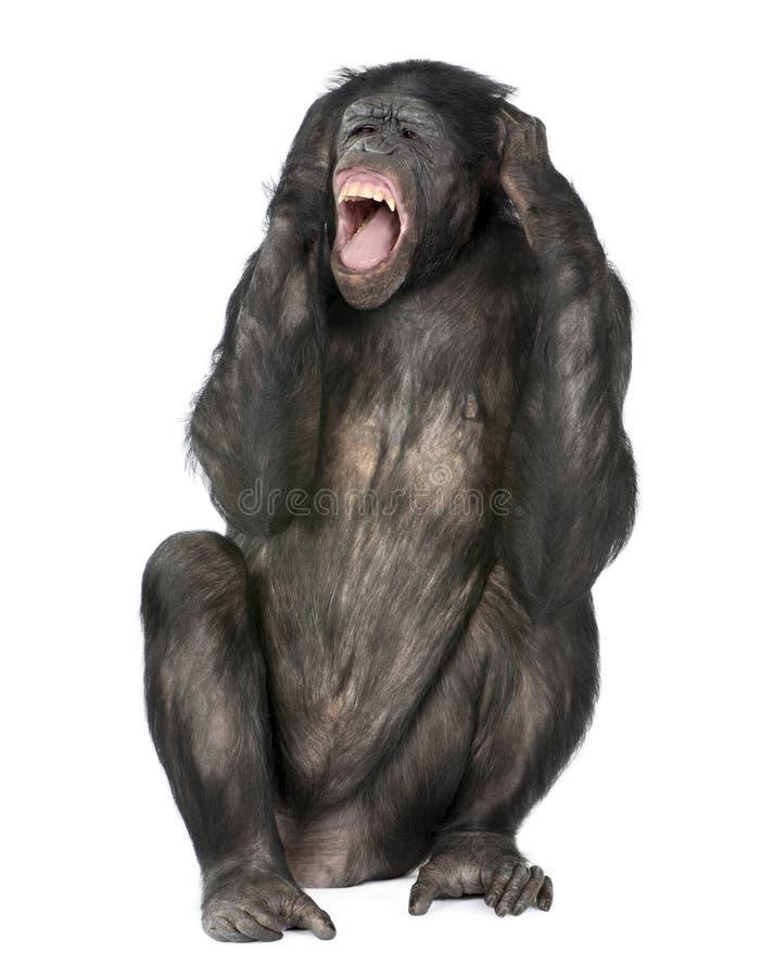 Het gekke aap gillen