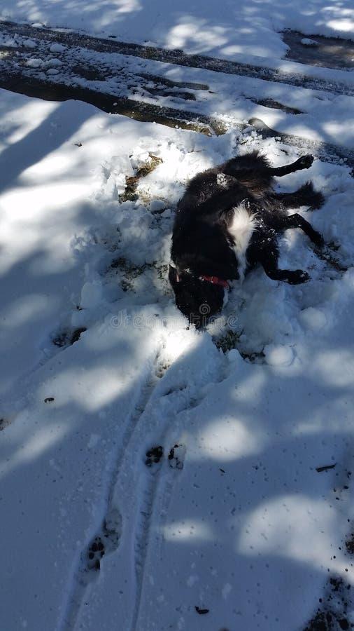Het gekke hond baden in sneeuw stock foto