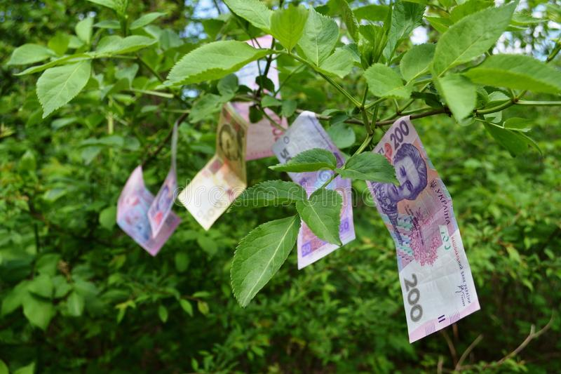 Het geld groeit op bomen stock afbeeldingen