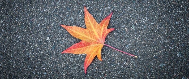 Het gele blad van een boom ligt op grijs geweven asfalt royalty-vrije stock afbeelding