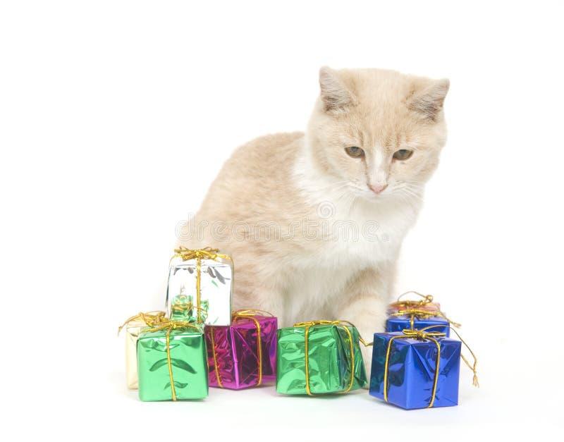 Het gele katje en stelt voor stock foto