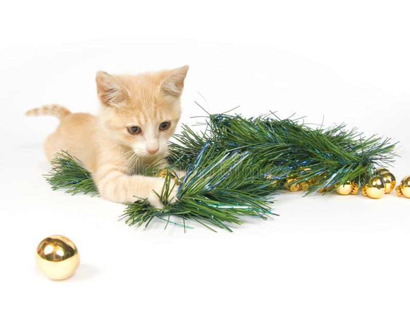 Het gele katje spelen met de Decoratie van Kerstmis royalty-vrije stock fotografie