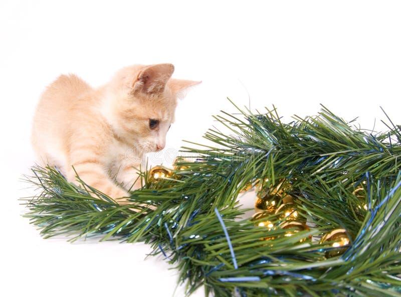 Het gele katje spelen met de Decoratie van Kerstmis stock foto's