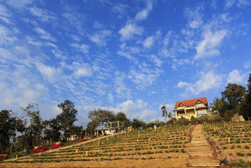 Het gele plattelandshuisje van het landbouwbedrijfhuis stock foto