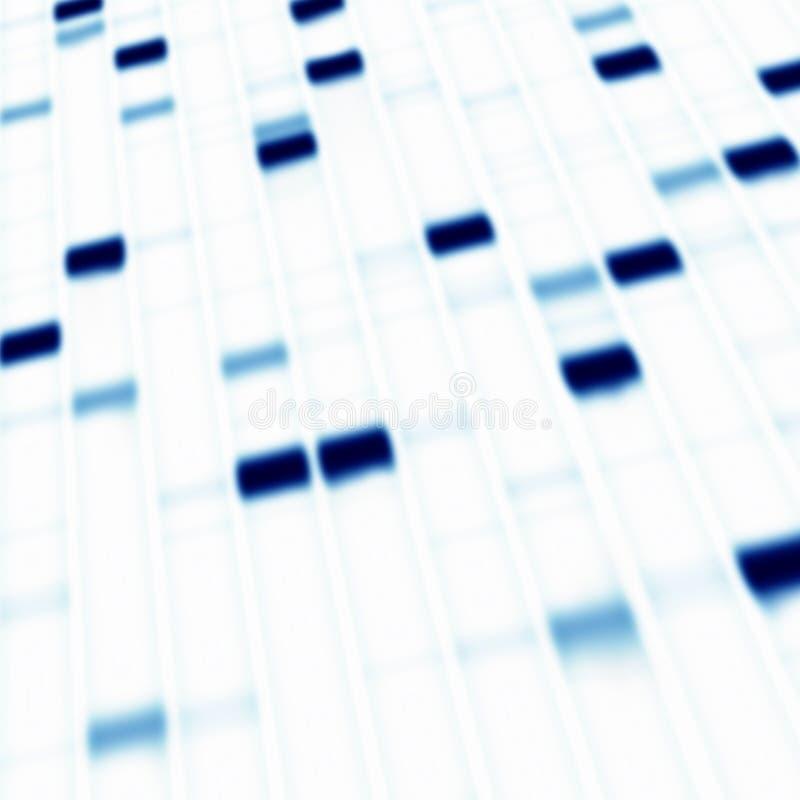 Het gelelektroforese van DNA stock foto's