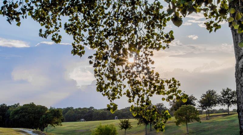 Het gelijk maken van Bladeren royalty-vrije stock afbeeldingen