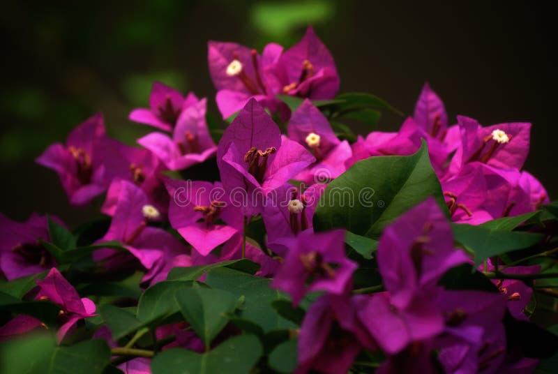 Het geluk is de natuurlijke bloem van plicht vector illustratie