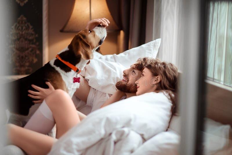 Het gelukkige familiepaar ligt in bed, speelt met favoriete hond, zorg over dier, brengt vrije tijd in comfortabele slaapkamer do royalty-vrije stock foto