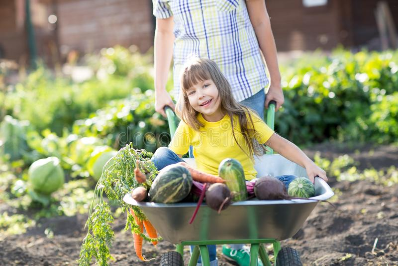 Het gelukkige kind met groenten zit in de kar n een tuin Gezond levensstijlenconcept stock foto's
