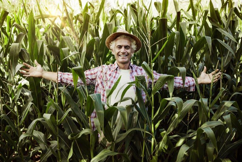 Het gelukkige landbouwer stellen op het gebied stock foto's