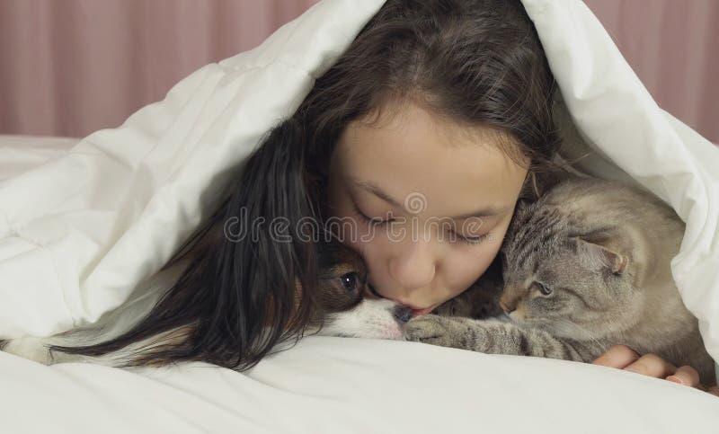 Het gelukkige tienermeisje communiceert met hond Papillon en Thaise kat in bed royalty-vrije stock foto