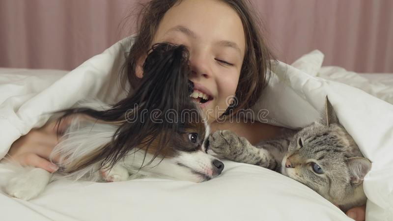 Het gelukkige tienermeisje communiceert met hond Papillon en Thaise kat in bed royalty-vrije stock foto's