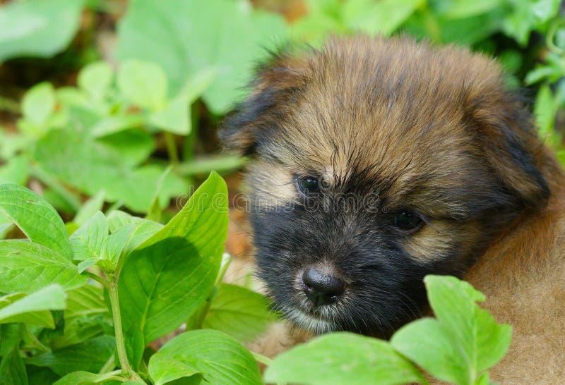 Het gemengde rassen bruine puppy spelen in groene tuin stock fotografie