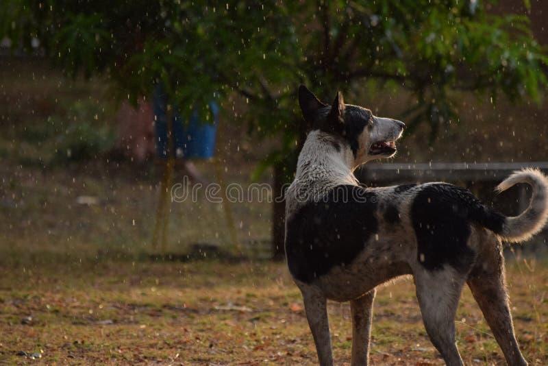 Het genieten van de van regen stock afbeeldingen