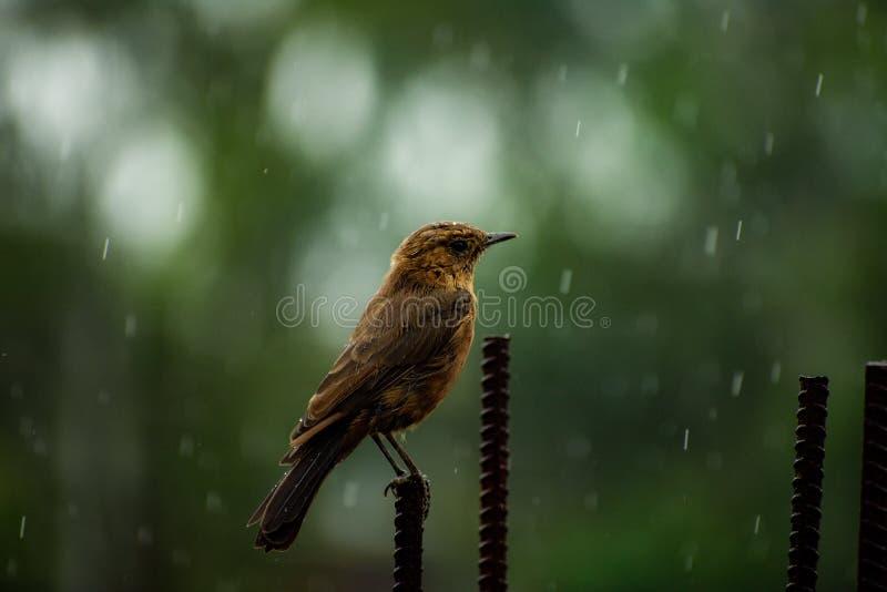 Het genieten van de van regenval stock foto's