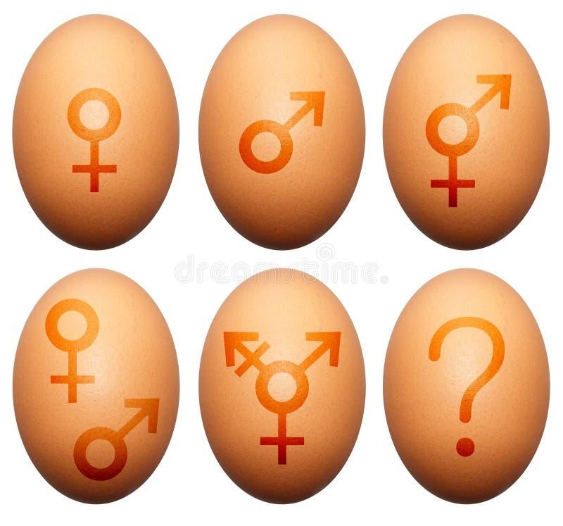 Het geslacht van het ei stock illustratie