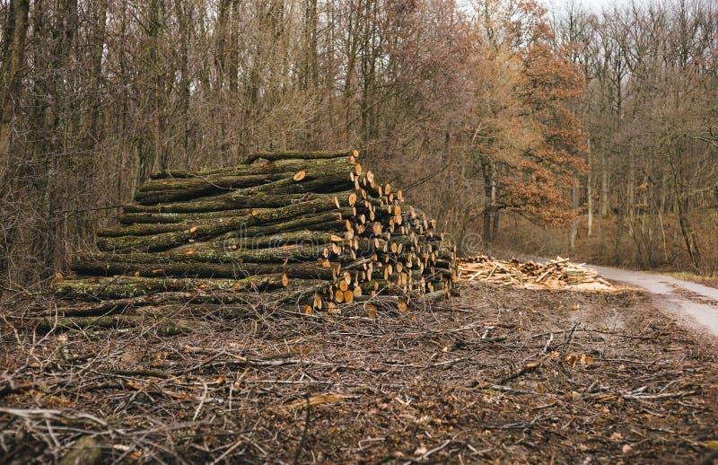 Het gestapelde hout opent bos op zonnige dag het programma Hoop van houten eik, beuk, pijnboom met weg op achtergrond Foto van ve stock fotografie