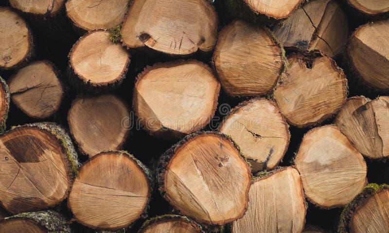 Het gestapelde hout opent bos op zonnige dag het programma Hoop van houten eik, beuk, pijnboom met weg op achtergrond Foto van ve stock foto's