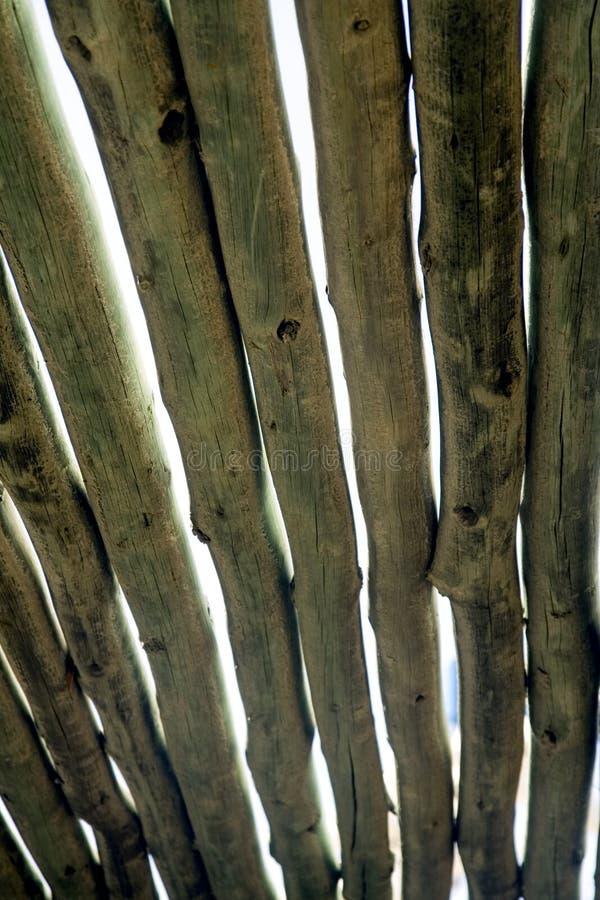 Pergola royalty vrije stock afbeeldingen afbeelding 29798529 - Pergola verkoop ...