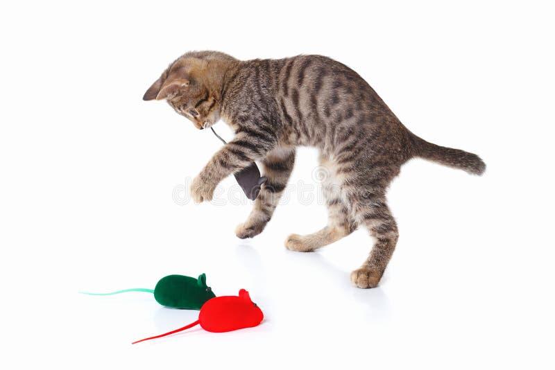 Het gestreepte katje wordt gespeeld met een rode, grijze en groene stuk speelgoed muizen op witte achtergrond royalty-vrije stock afbeeldingen