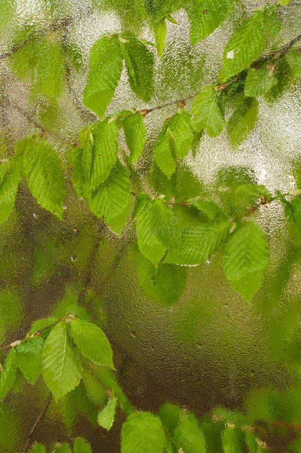 Het gevallen die blad aan het venster wordt geplakt dat van regen nat wordt daalt Comfortabel venster met de lente nieuwe bladere royalty-vrije stock afbeelding