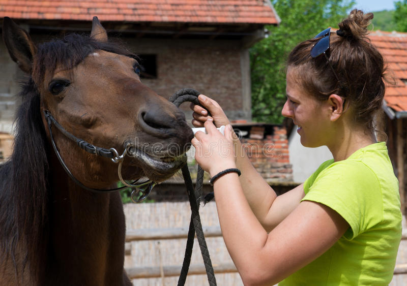 Het geven van een geneeskunde aan een paard royalty-vrije stock foto's