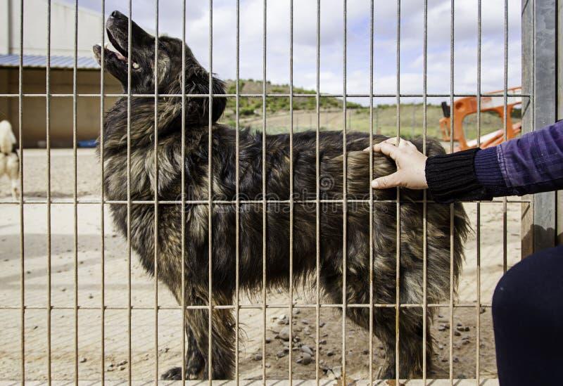 Het geven van liefde over verlaten honden in een kennel royalty-vrije stock afbeeldingen
