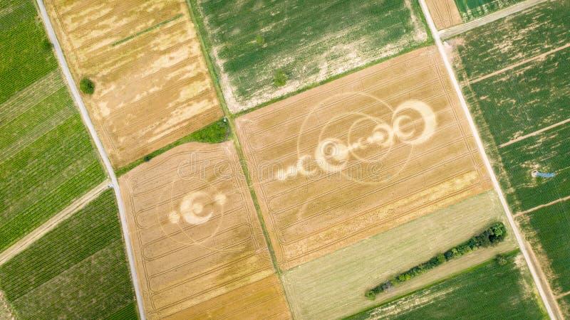 het gewas omcirkelt gebied de Elzas Frankrijk stock foto