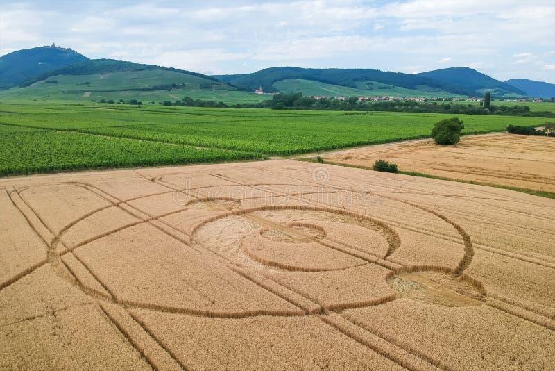 het gewas omcirkelt gebied de Elzas Frankrijk stock afbeeldingen