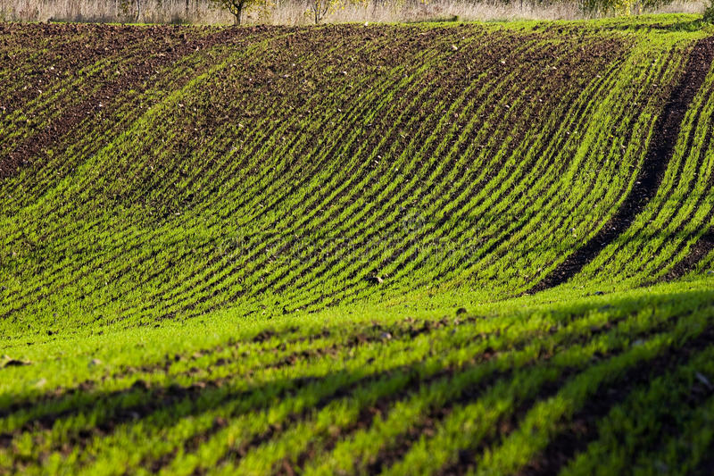 Het gewassengebied van de winter royalty-vrije stock afbeeldingen