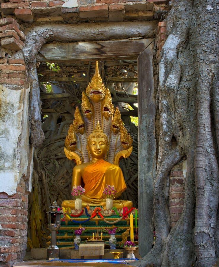 Het gezette altaar van Boedha in oude verlaten tempel bij ANG-Leren riem, Thailand royalty-vrije stock foto's