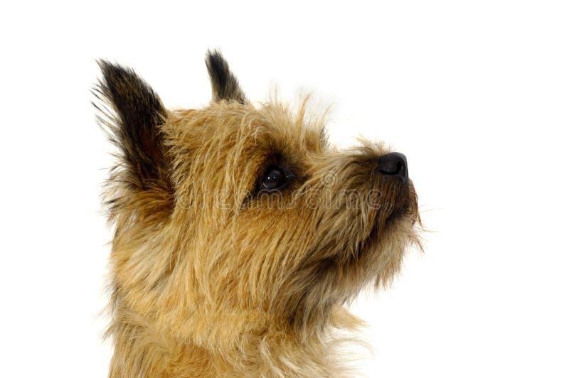 Het gezicht van de hond royalty-vrije stock foto