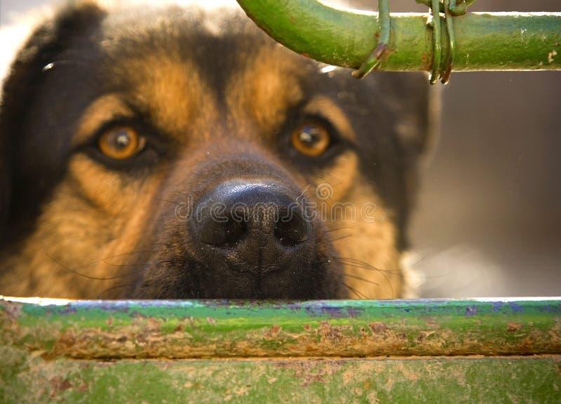 het gezicht van de hond, close-up royalty-vrije stock afbeelding