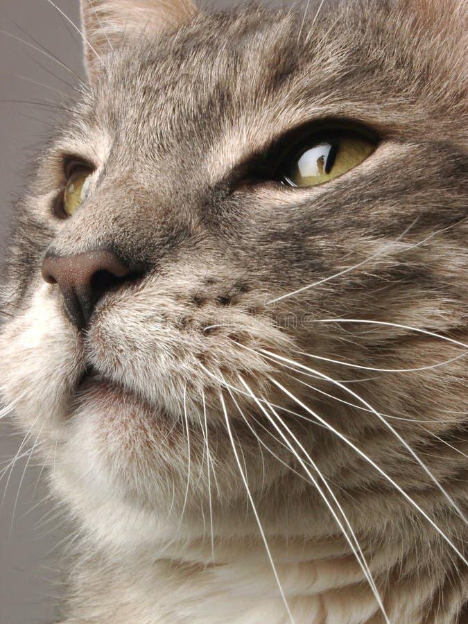 Download Het Gezicht van de kat stock afbeelding. Afbeelding bestaande uit macro - 284471