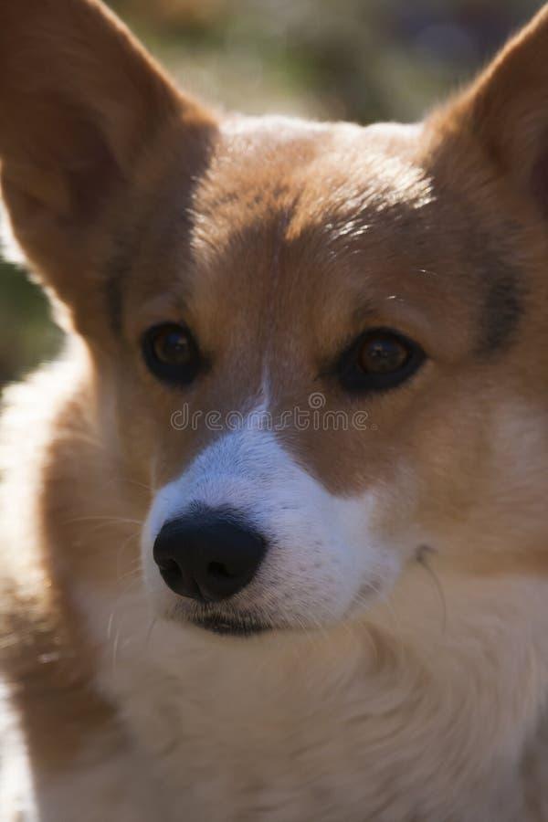 Het gezicht van een dogstock foto