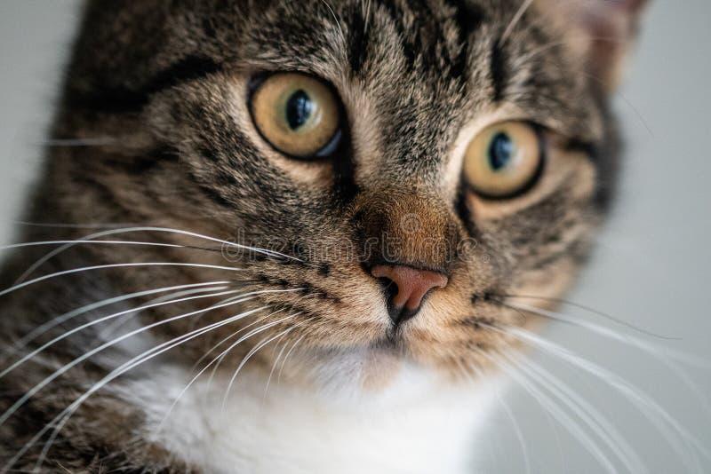 Het gezicht van een kat stock foto's