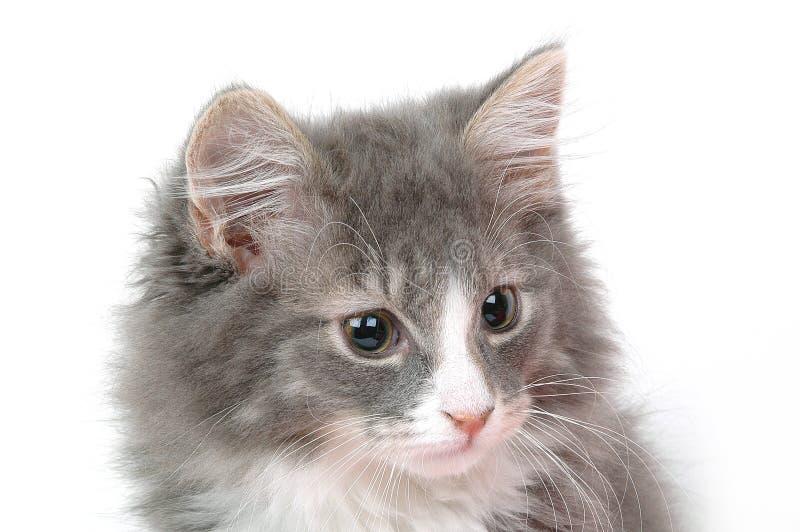 Het gezicht van het katje royalty-vrije stock afbeeldingen