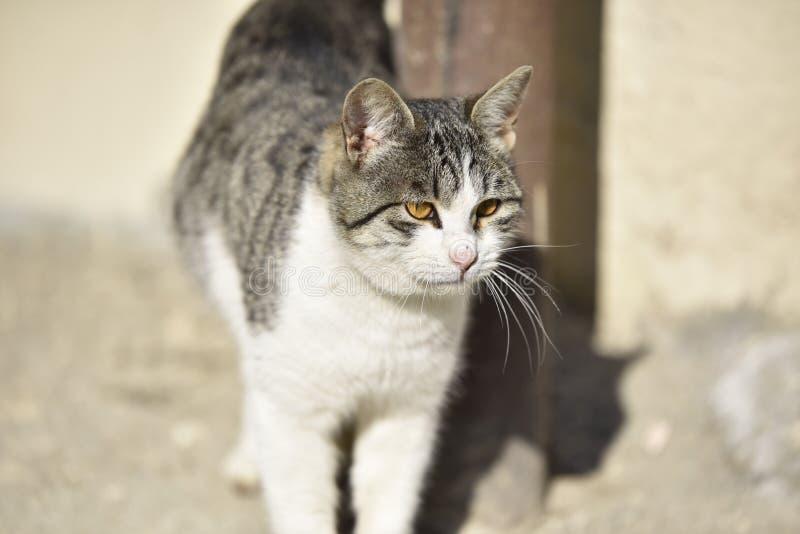 Het gezichts dichte omhooggaand van de kat stock fotografie