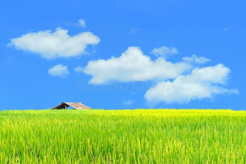 Het gezichtspunt van de landschapsweide en groen padiepadieveld voor backgrou stock foto's