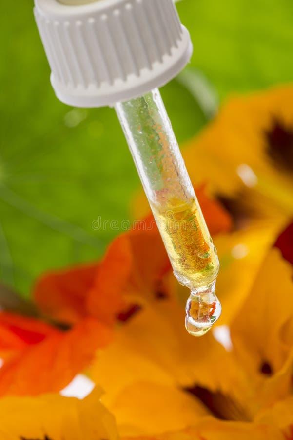 Het gezonde uittreksel van Oostindische kersbloem Tropaeolum royalty-vrije stock foto