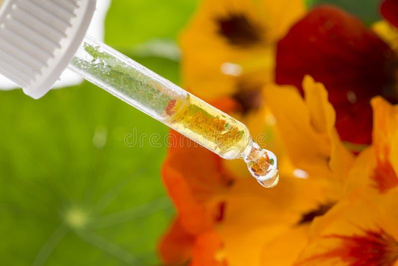 Het gezonde uittreksel van Oostindische kersbloem Tropaeolum stock foto