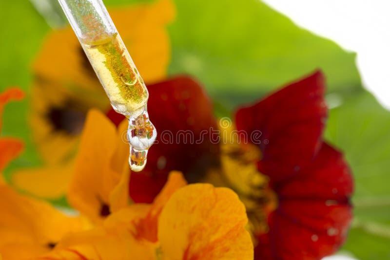 Het gezonde uittreksel van Oostindische kersbloem Tropaeolum stock afbeelding