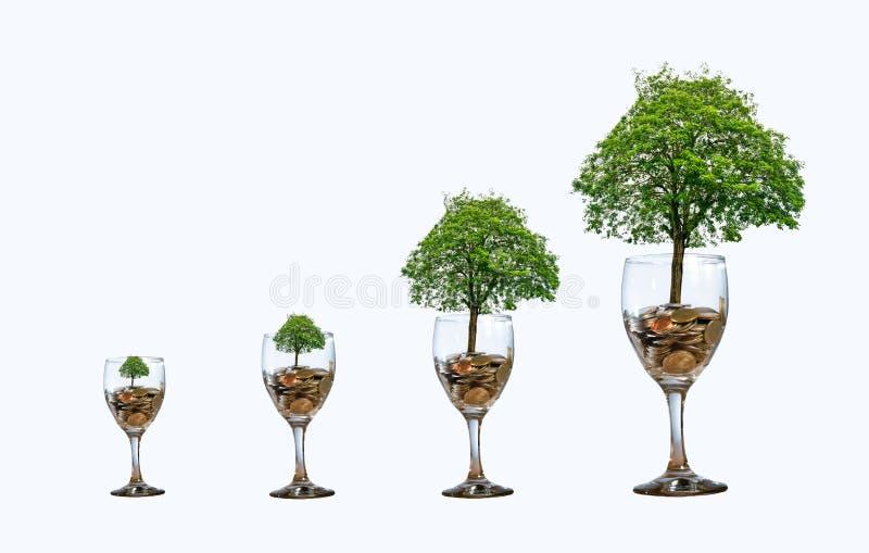 Het glas van het boommuntstuk isoleert van de het geldhand van de verhogingsbesparing het Muntstukboom de boom op de stapel kweek stock foto's