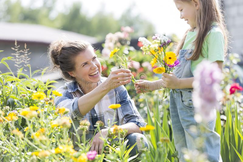 Het glimlachen moeder het geven bloeit aan dochter terwijl het tuinieren bij landbouwbedrijf stock afbeelding