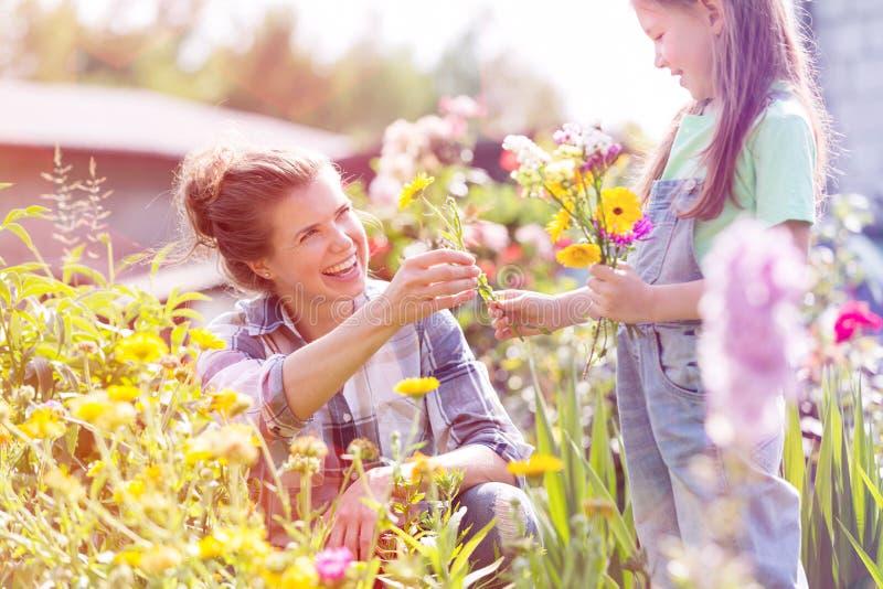 Het glimlachen moeder het geven bloeit aan dochter terwijl het tuinieren bij landbouwbedrijf royalty-vrije stock afbeelding