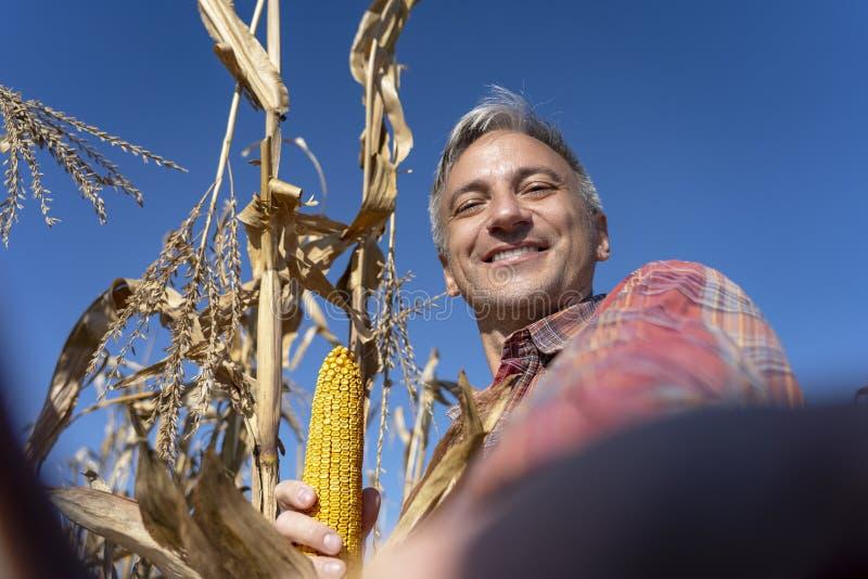 Het glimlachen van de Mature Farmer Holding Corncob en het innemen van Selfie Portrait royalty-vrije stock foto's