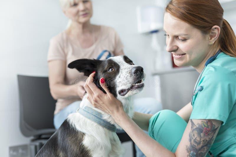 Het glimlachen van jonge veterinaire arts het strijken hond bij kliniek royalty-vrije stock foto's