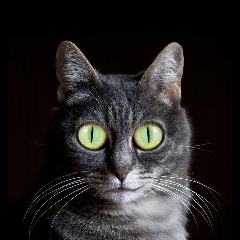 Het glimlachen van kat met grote ogen stock fotografie