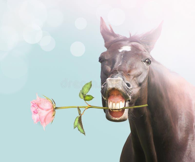 Het glimlachpaard met roze nam op blauwe bokehachtergrond toe stock afbeeldingen